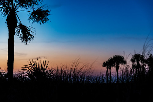 Sea Grass & Palm Tree Silhouette Sunset