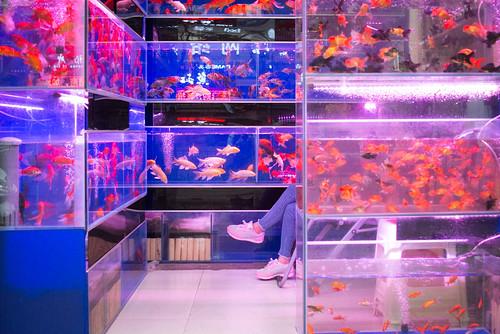 Xi'an | fish store