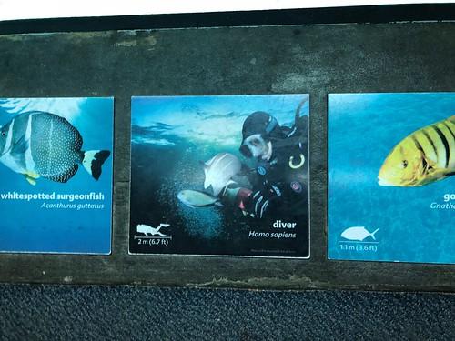 138 Diver Sign