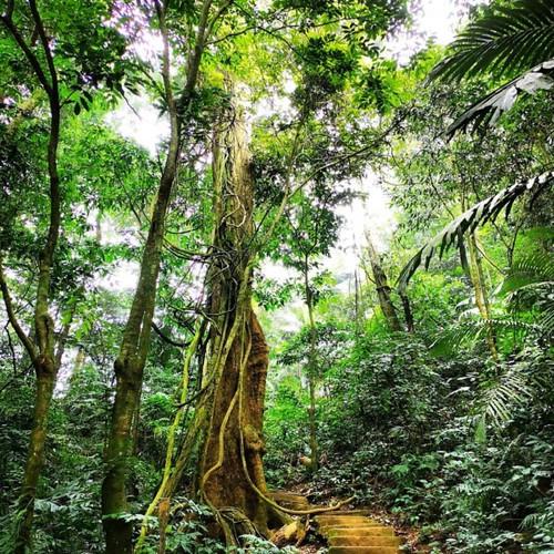 Thung Nham Bird Garden Ninh Binh   Entrance fee & Tips to the Bird Park