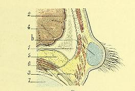 This image is taken from Page 25 of Traite d'anatomie topographique avec applications médico-chirurgicales