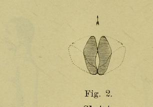 This image is taken from Page 18 of Handbok i gymnastik för arméen och flottan : utgifven pÃÂ¥ nÃÂ¥digste befallning