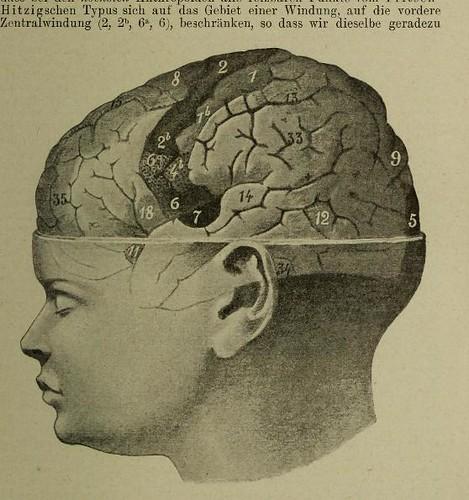 This image is taken from Page 75 of Atti del V Congresso internazionale di psicologia : tenuto in Roma dal 26 al 30 Aprile 1905