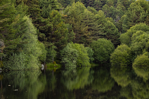 Reflections of the wood in one of the reservoirs of La Barranca, Navacerrada, Spain.