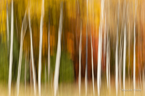 All the Colors of the Forest.