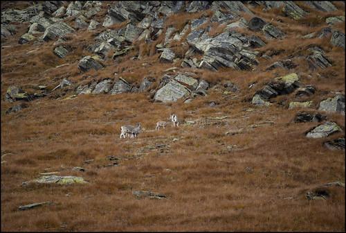 heading towards camouflage...