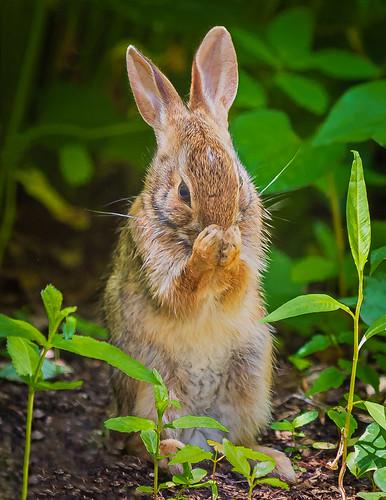 A Bunny's Prayer