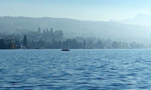Morgendunst auf dem Zürichsee * Morning haze on Lake Zurich * Neblina matutina sobre el Lago de Zúrich *  .   P1390410-001