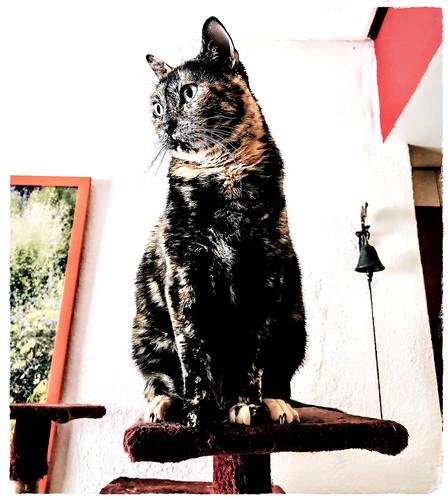 Yaiza, la gata que es hija del Sol