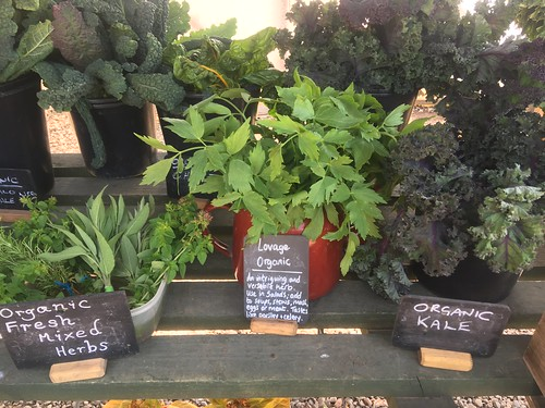 Organic fresh mixed herbs, Lovage, Organic Kale from the vegetable garden at Hanbury Hall
