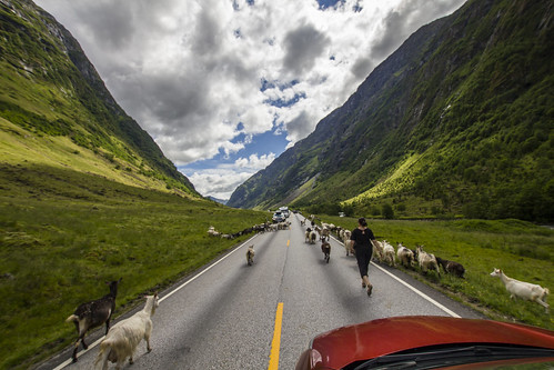 Ut å jage geiter