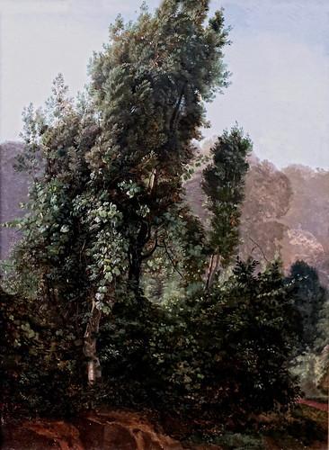 IMG_5899F Friedrich von Nerly. 1807-1878.  Erfurt Rome Venise  Peuplier couvert de vigne vierge.  Creeper-covered Poplar. 1835.   Hambourg Kunsthalle.