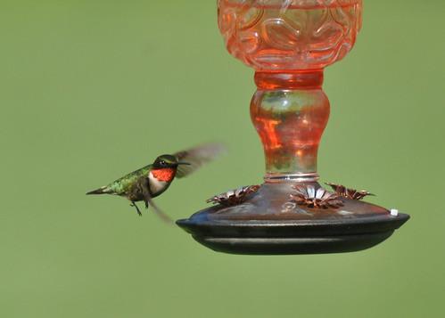 20190707_hummingbird.jpg