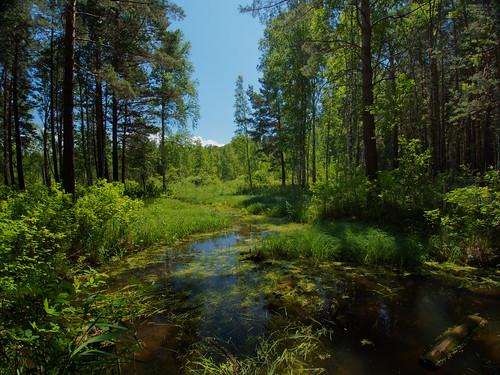Glykhaya River, Karakan forest
