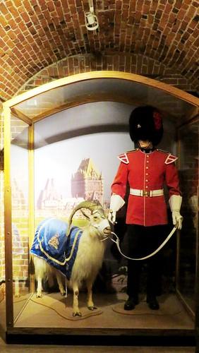 Le bouc Batisse (ici empaillé...) est la mascotte du Royal 22e Régiment. Le soldat du 22e qui porte le même uniforme rouge et le même bonnet à poils que les fusiliers de la garde de Buckingham Palace, ne l'est pas...  Citadelle de Québec