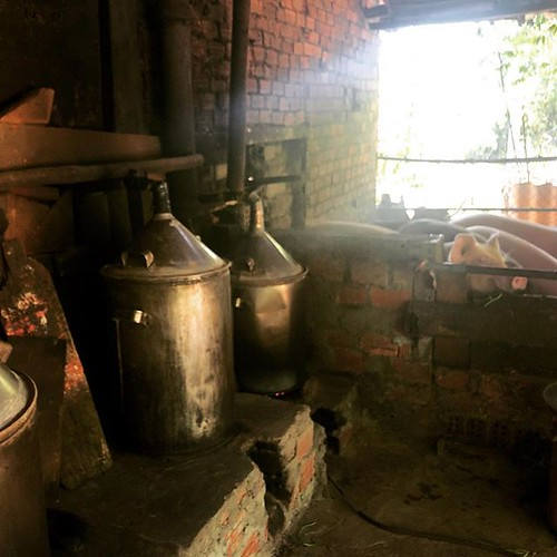 Distilling rice wine. Leftover mash feeds the pigs. Pig manure makes methane. Methane fuels the stills. No waste.