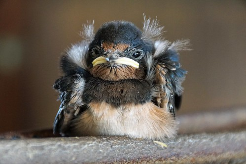 Aus dem Nest gefallen - Schicksal ungewiss