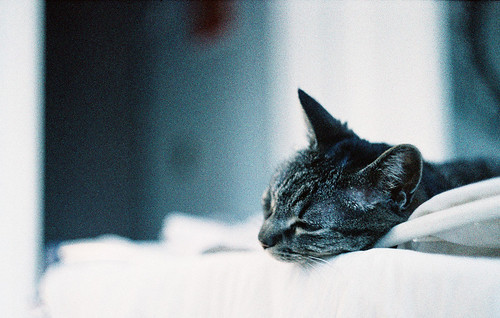 Lola repose