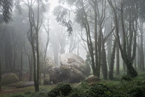 F5692 ~ In to the mists...