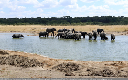 0154 IMG_2959 Elephants at the Kenedy 2 watering hole in Hwange National Park