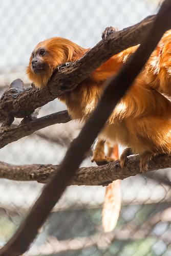 180323 National Zoological Park-05.jpg