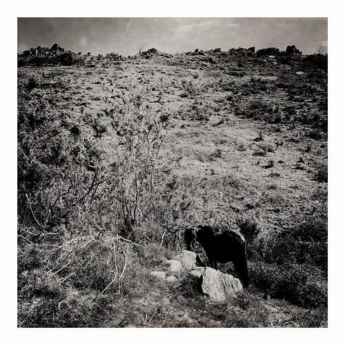 L'histoire dit qu'il avait pris/ L'esprit grande prairie/ Il était loin loin, loin loin...