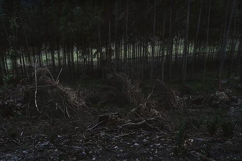 8/8 Nevím co dělám, ale svítím do tmy. Poslední fotografie souboru je jemně dosvětlená scéna zeleného pruhu rytmicky přerušovaného zbývajícími stromy, které ještě stojí. . . . . . #sonyimages #sonya7ii #featureshotz #igerscz #sonygangcz #subjectivelyobjec