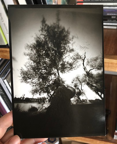 venerable Riverbank tree, still intact
