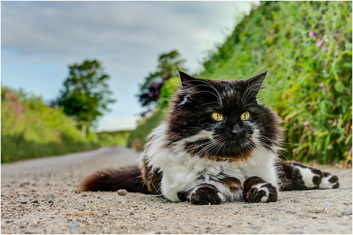Cats Eyes ...
