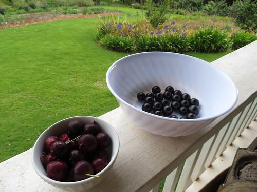 starr-190426-6422-Eugenia_brasiliensis-fruit_on_left_with_Jaboticaba_on_right-Hawea_Pl_Olinda-Maui