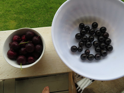 starr-190426-6421-Myrciaria_cauliflora-fruit_on_right_Brazillian_Cherry_on_left-Hawea_Pl_Olinda-Maui