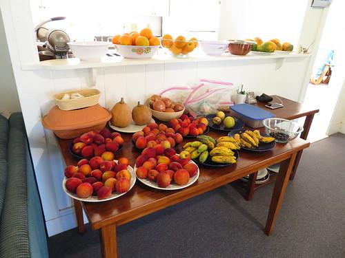 starr-190512-6484-Prunus_persica_var_persica-fruit_table_featuring_peaches_bananas_pumpkins_jaboticaba_pepino_dulce_citrus_and_papayas-Hawea_Pl_Olinda-Maui