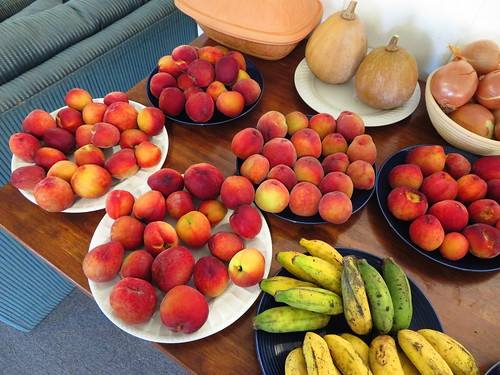 starr-190512-6485-Prunus_persica_var_persica-fruit_harvested_ready_to_eat-Hawea_Pl_Olinda-Maui