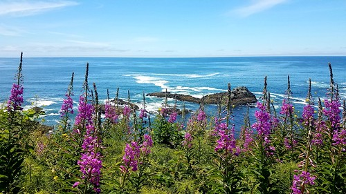 Summer wildflowers at Yaquina Head