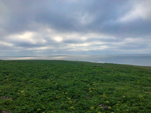 Northeast Point from Hutchinson Hill_St Paul Island_AK-201906280001