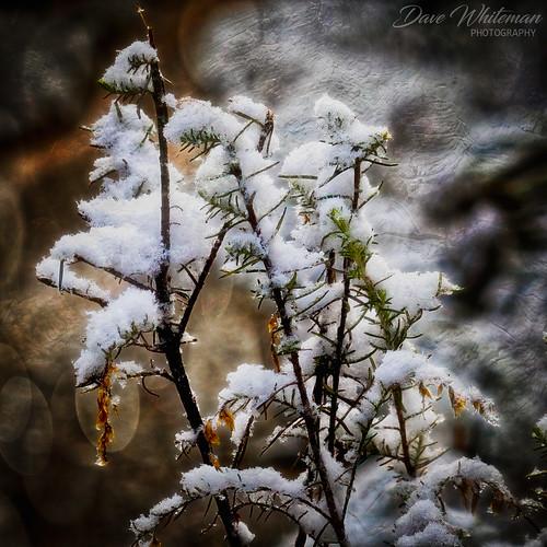 Reminder of Winter