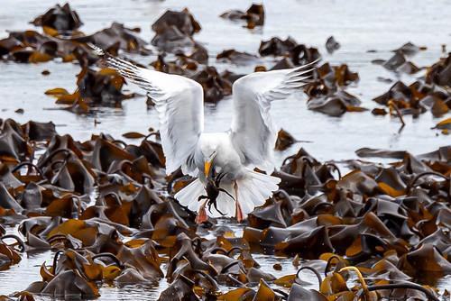 crab fishing