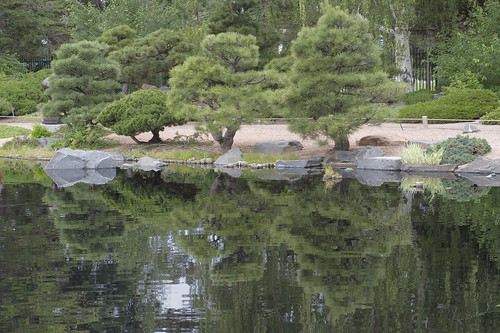 Mugo garden