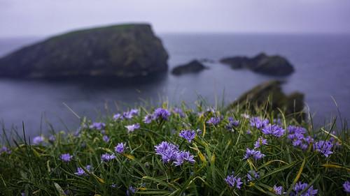 St Ninian Flowers