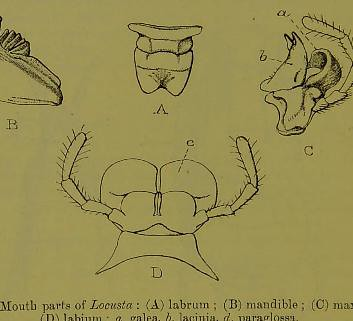This image is taken from Page 4 of The Fauna of British India, including Ceylon and Burma [electronic resource]