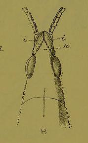 This image is taken from Page 3 of The Fauna of British India, including Ceylon and Burma [electronic resource]