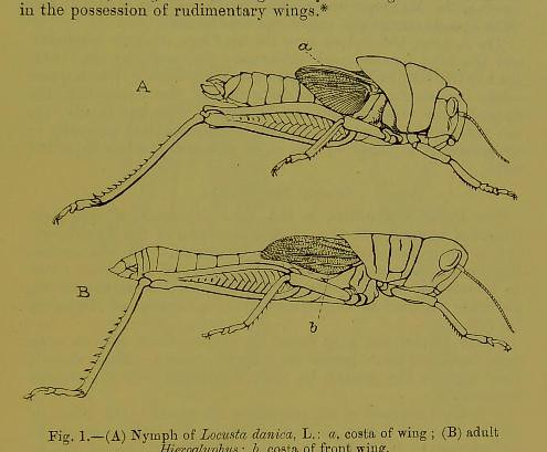 This image is taken from Page 1 of The Fauna of British India, including Ceylon and Burma [electronic resource]