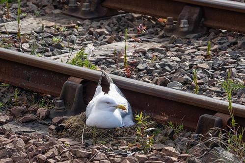 Living close to the track, Malliag Station, Scotland
