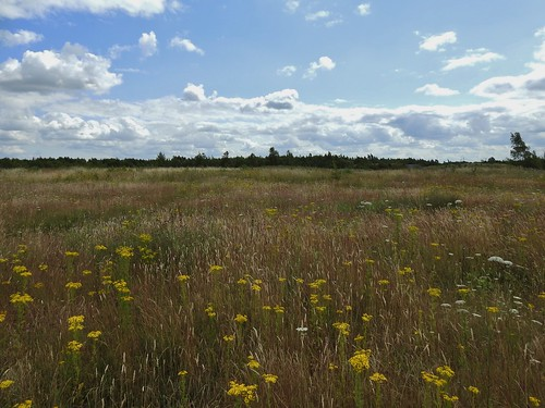 Thorne Moors Nature Reserve near Doncaster, Yorkshire, England - July 2019