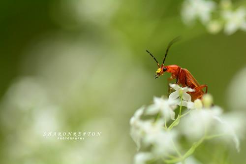Nature's pollen spreader
