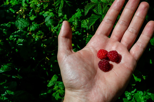 Red raspberry on a man's hand