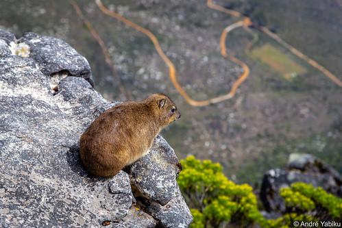 a 1.000m jump - Cape Town, South Africa