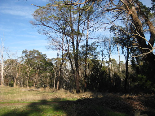 Gum Trees and Native Grasses; Stanley Park Mount Macedon