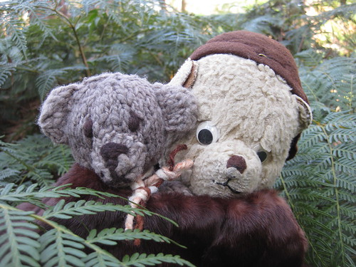 Paddington and Scout Amid the Ferns