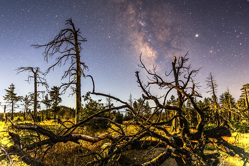 Milky Way and Moonlit Twisted Trees